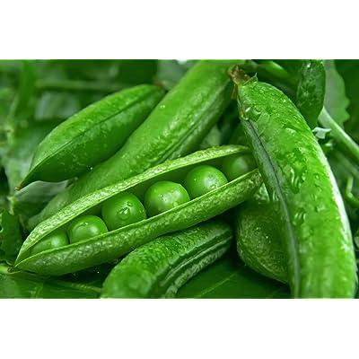 """Green Arrow"" Garden Peas, 50+ Premium Heirloom Seeds, (Isla's Garden Seeds), Non GMO, 90% Germination, Highest Quality Seeds, 100% Pure : Garden & Outdoor"