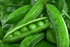 Green Arrow Garden Peas, 50 Heirloom Seeds Per Packet, Non GMO Seeds