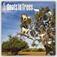 Goats in Trees 2016 Square 12x12 (Multilingual Edition)