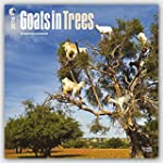 Goats In Trees 2016 Square 12x12 Wall...