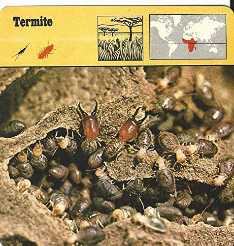 1975 Editions Rencontre, Animals Card, 23.573 Termite