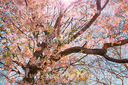 Spring Decor, Shabby Chic, Floral Print, Nature Art, Central Park Photography, Living Room Decor, Foyer Art, Pink, Sizes Available from 5x7 to 20x30. ()