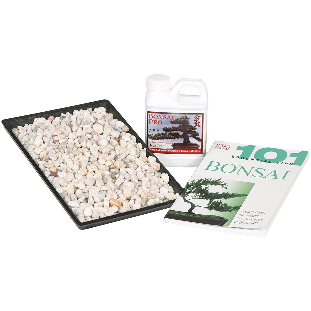 Brussel's Bonsai Starter Success Kit with 11'' Humidity Tray by Brussel's Bonsai