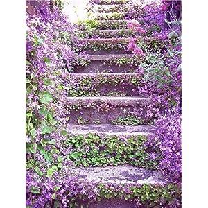 7: 100 pezzi Semi di fiori di gelsomino rampicante esotici Semi di gelsomino colorati Pianta profumata Semi di gelsomino…