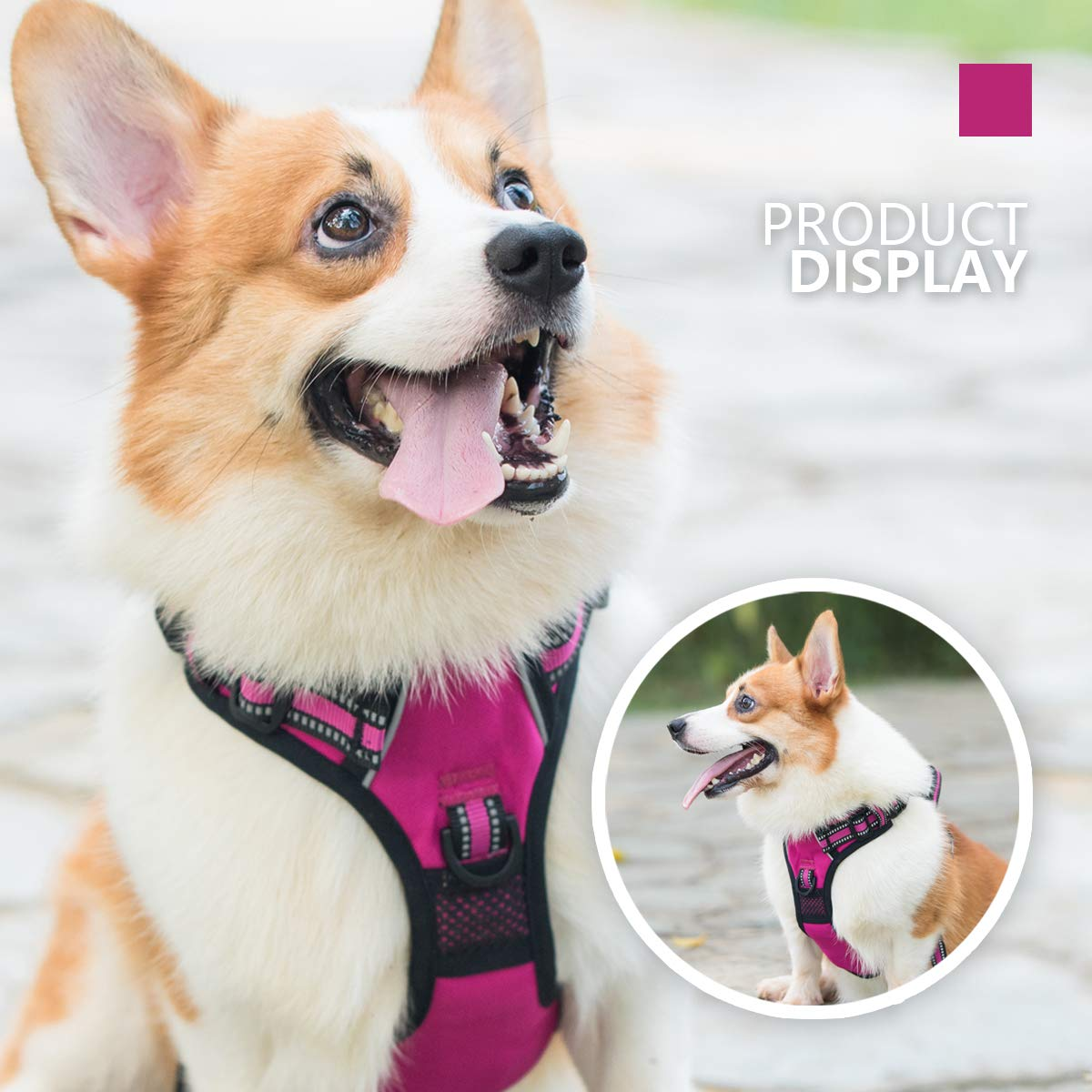 PoyPet Arnés para perro sin tirar, [liberación en el cuello ...