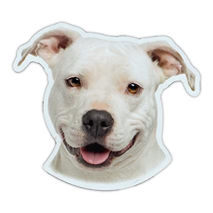Tool  Box  Magnet Funny Adopted Pit Bull Terrier Dog  Refrigerator