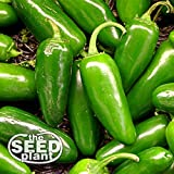buy Jalapeno M Pepper Seeds - 200 Seeds NON-GMO now, new 2020-2019 bestseller, review and Photo, best price $1.95