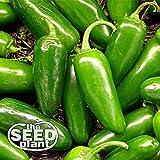 Jalapeno M Pepper Seeds - 200 Seeds NON-GMO