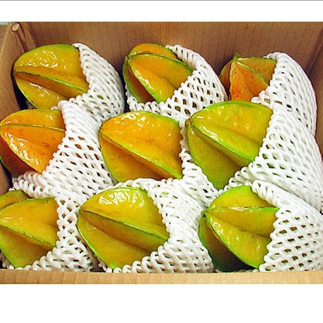 必要とする閲覧するインストラクター沖縄県産 スターフルーツ 約2kg (約4-14玉) ゴレンシ (五斂子) 贈答用におすすめ 星の形をしたユニークな果物