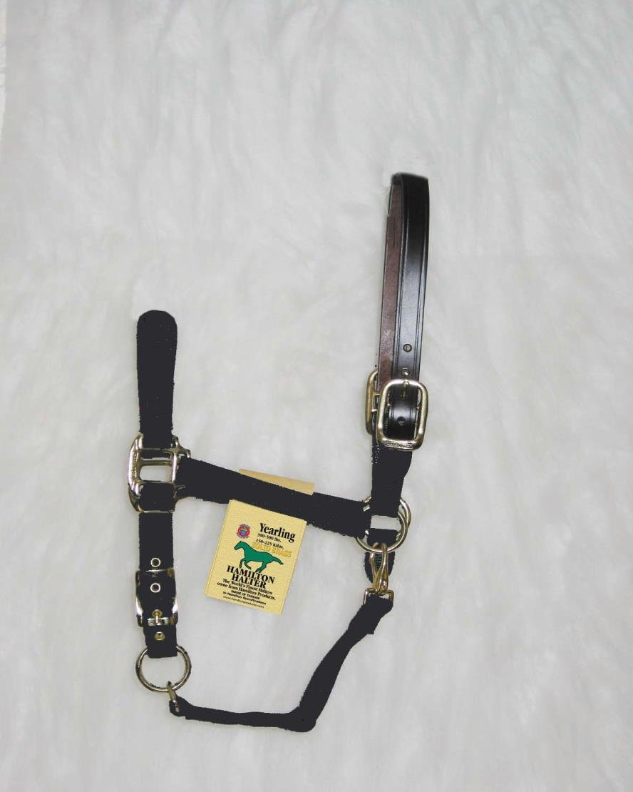 DPD Adjustable Horse Halter with Leather HEADPOLE - Yearling - Black