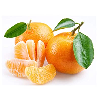 Cold-hardy - Sweet Mandarin Orange Tree ( Citrus reticulata ) 25+ fresh seeds : Garden & Outdoor