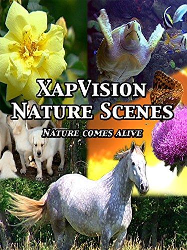 XapVision Nature Scenes - Nature Comes Alive