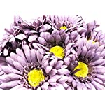 CraftMore-Ash-Colored-Gerbera-Daisy-Stems-14-Inch-Set-of-12