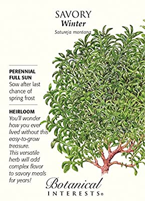 Winter Savory Seeds - 200 mg - Perennial