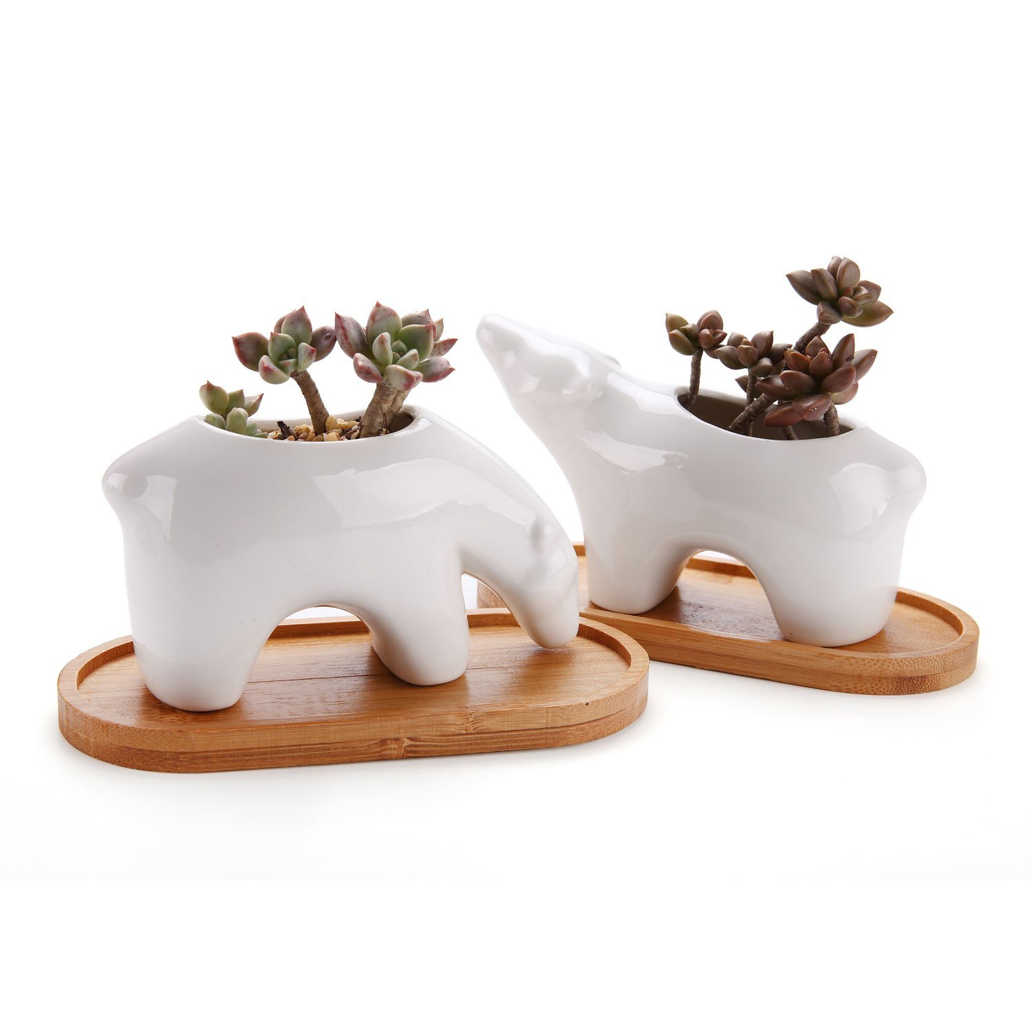 T4U Succulent Plant Pot Cactus Ceramic Planter with Bamboo Tray Pack of 2 - Polar Bear, Small Herb Container White Animal Window Box Decorative Ornament Office Desktop Wedding Birthday