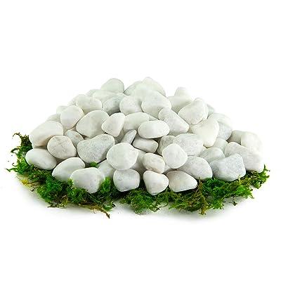 Southwest Boulder & Stone Porcelain White Pebbles | 10 lbs | Natural Rocks, White Stones for Potted Plants, Gardening, Succulents, Aquariums, Terrariums, and More (1/4 Inch) : Garden & Outdoor