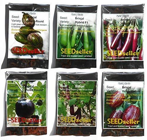 SEEDseller Brinjal Seeds -Combo Pack of 6 Varieties
