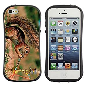 Hybrid Anti-Shock Bumper Case for Apple iPhone 5 5S / Squirrel Smoking