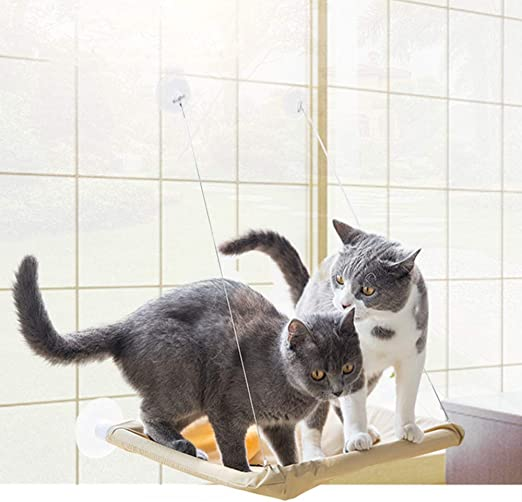 TRELLA - Hamaca para Gatos, Cesta, Accesorio para Gatos, Ventosa, Nido Colgante, alféizar, Cristal, para Mascotas, Mascotas: Amazon.es: Productos para mascotas