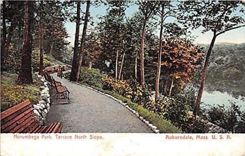 - Norumbega Park and Terrace North Slope Auburndale Massachusetts Postcard