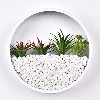 "8"" H White Round Glass Wall Vase Planter, Indoor Decorative Contemporary Morden Circle Iron Vase for Herb,Small Cactus for Room Decor, Gift Box: Garden & Outdoor"