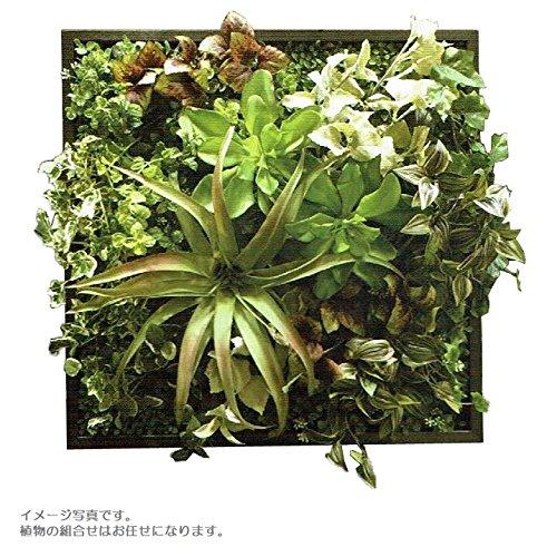 人工観葉植物 アーティフィシャルグリーンアレンジ壁面植裁 □53cm rg-020 B074FSXZDR