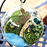 DIY Micro Landscape Plant Glass Hanging Ball With