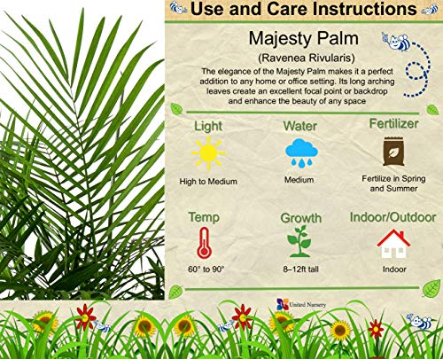 United Nursery Majesty Palm Tree, Live Indoor and Outdoor Plant. 36'' Shipping Size. Shipped Fresh in Grower Pot from Our Florida Farm by United Nursery (Image #1)