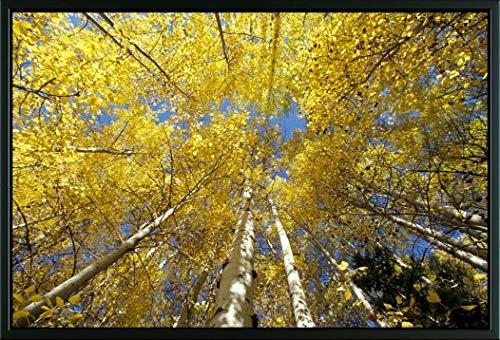 (Easy Art Prints Stuart Westmorland's 'Stevens Pass Fall-Colored Aspen Trees' Premium Framed Canvas Art - 20