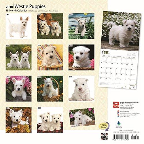 West Highland White Terrier Puppies 2018 Wall Calendar Photo #3
