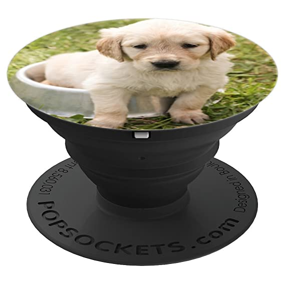 Amazon Com Cute Yellow Lab Puppy Dog In His Moms Dog Food Bowl