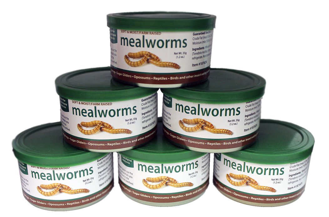 Canned Mealworms (1.2 oz. 6 Pack) - Healthy High Protein Insect Treat - Hedgehogs, Sugar Gliders, Reptiles, Wild Birds, Chickens, Lizards, Bearded Dragons, Skunks, Opossums, Fish, Amphibians, Turtles by Exotic Nutrition
