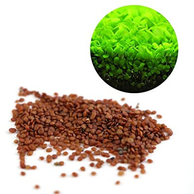 DEWIN Aquarium Plant Seeds - Mini Leafs Easy to Grow Decoration for Fish Tank Aquarium Pond,with 2 Types (L): Pet Supplies