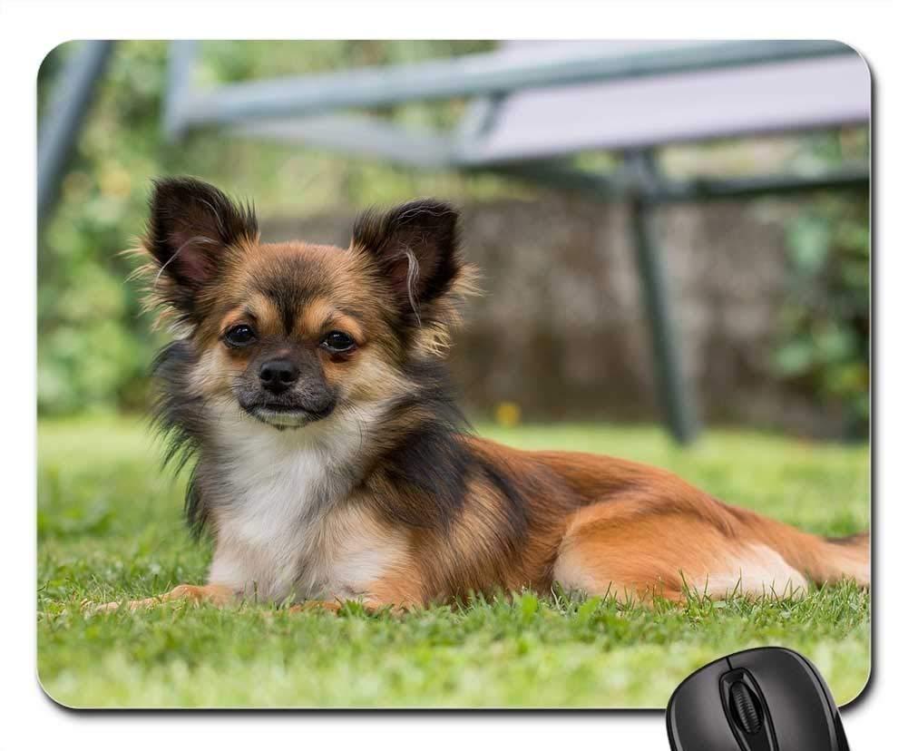 犬用マウスパッド 1122-007 220*180*3 mm B07L4WDTJ8 Fl21 300*250*3 mm 300*250*3 mm|Fl21