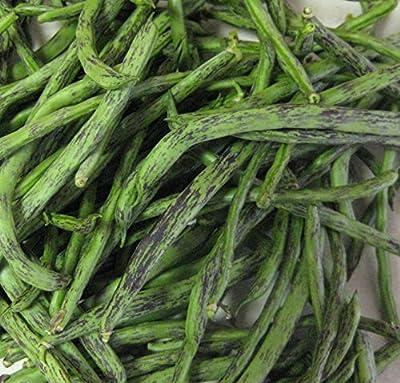Rattlesnake Pole Bean Seeds- Heirloom Variety- 30+ Seeds by Ohio Heirloom Seeds