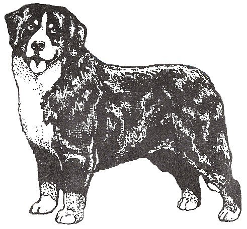 Dog Rubber Stamps - Bernese Mountain Dog-1F Size:2-1/4