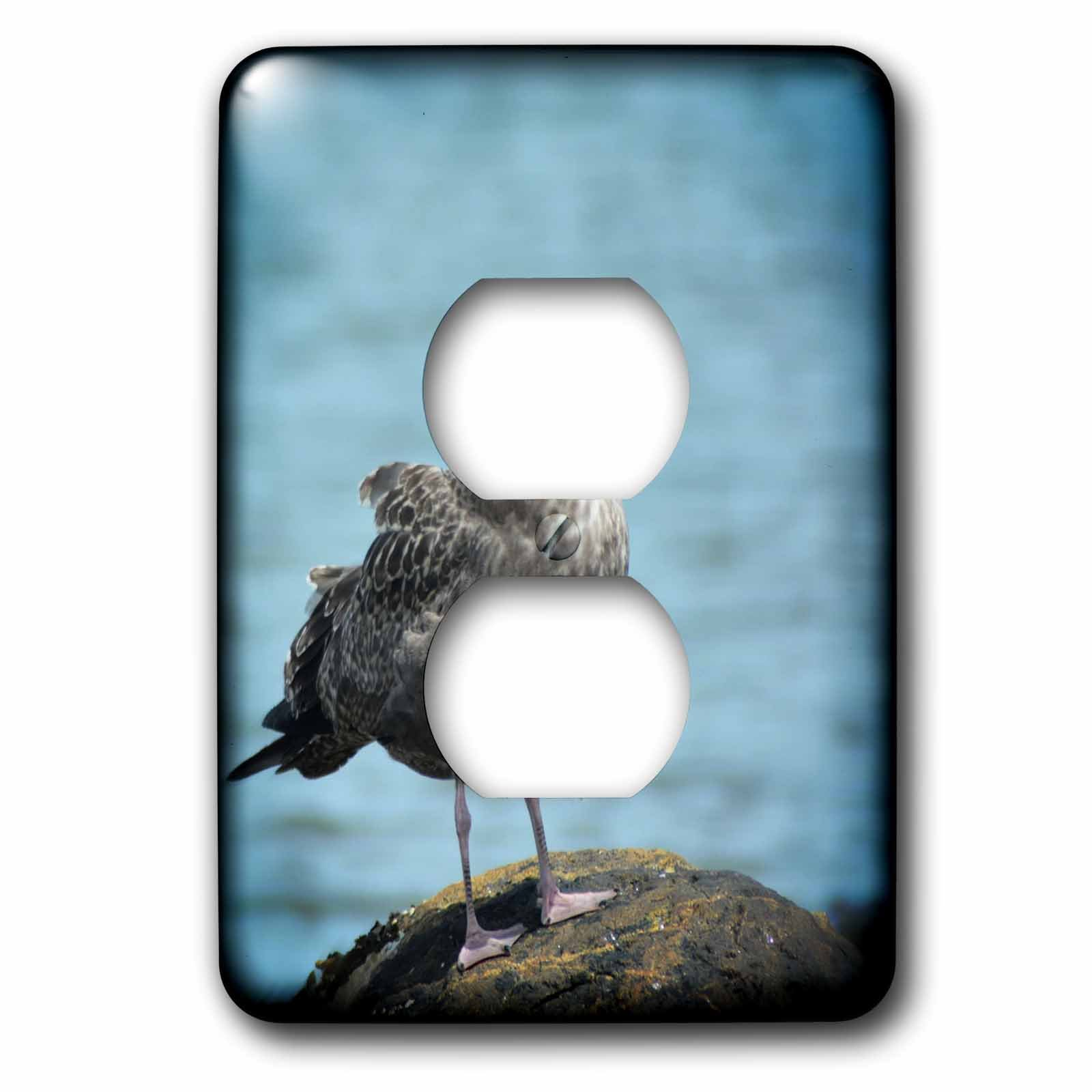 3dRose WhiteOaks Photography and Artwork - Seagulls - Seagull Thinking is a photo I took in Salem Massachusetts - Light Switch Covers - 2 plug outlet cover (lsp_265365_6)