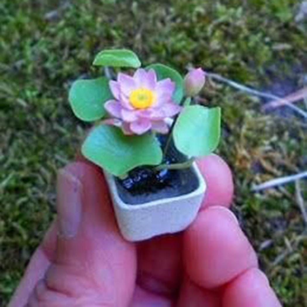 Mini Wasserlotus 5 Samen Saatenmischung Fur Wohnung Und Garten Bio