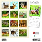 White Tailed Deer 2019 12 x 12 Inch Monthly Square