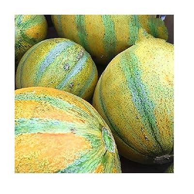 Seeds Israel ogen Melon 50 Seeds Non-GMO : Garden & Outdoor