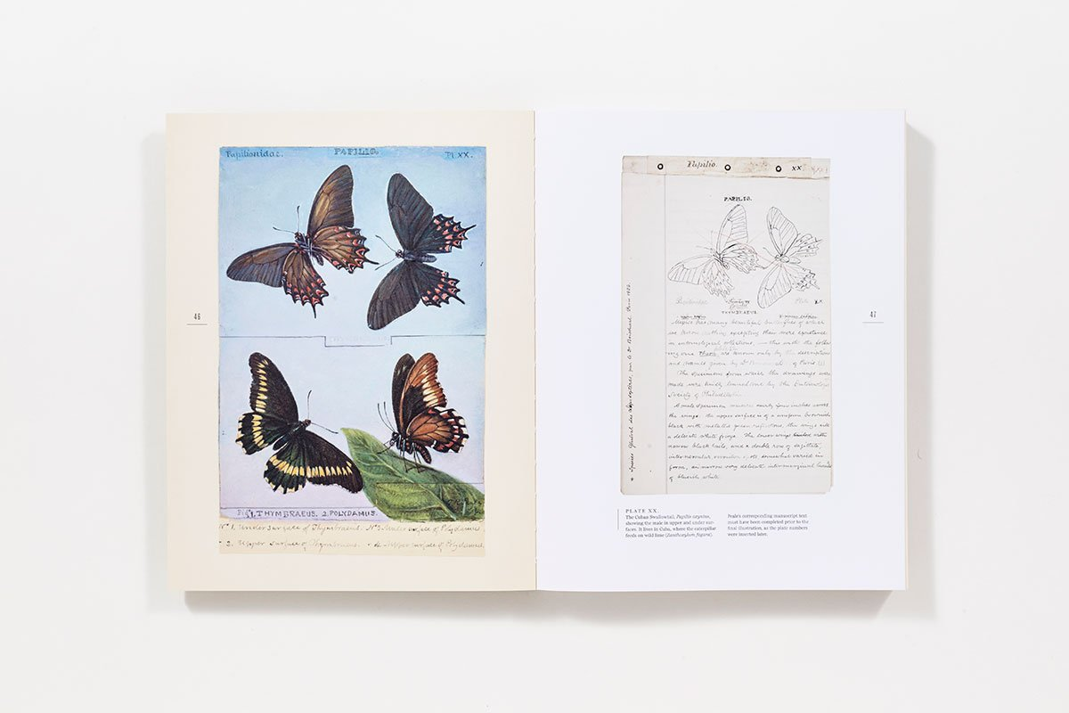 the butterflies of north america titian peale s lost manuscript the butterflies of north america titian peale s lost manuscript kenneth haltman titian peale david grimaldi 9781419717840 com books