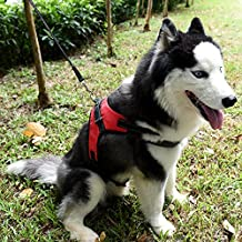 kiwitata Dog Harness- Leash Included,Dog Vest Halter Soft Harness Leashes Set,Adjustable and Durable Harness for Pet All Size Dog Daily Training Walking Running