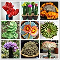 ScoutSeed 100 PCS Semillas Mixtas Flor de Cactus Loto Suculenta Lithops Pseudotruncatella NUEVO