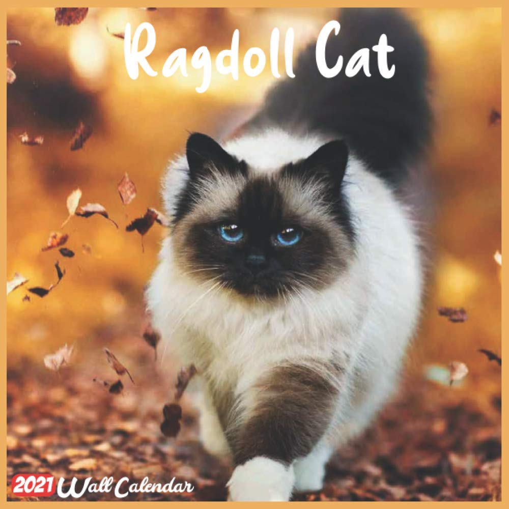 Ragdoll Cat 2021 Wall Calendar: Official Ragdoll Cat Calendar 2021, 18 Months