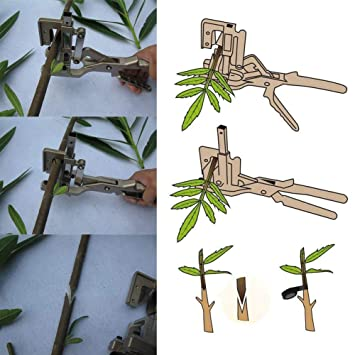 Amazon.com : Lianqi New Style Professional V-share Grafting Tool Scissors Vaccination Knife Cutting Pruner Garden and Orchard Tools for Grafting Bonsai ...