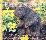 Baby Porcupine, Aubrey Lang, 155041562X