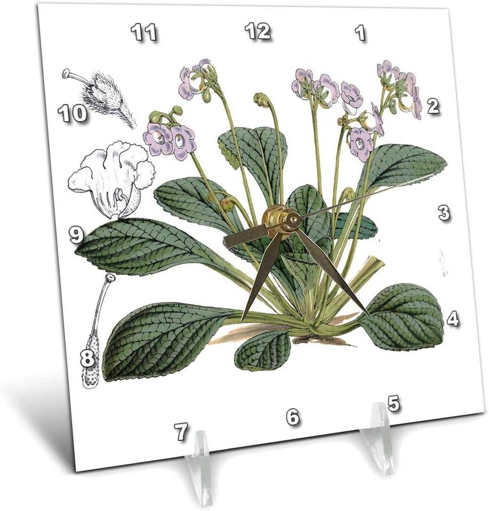 3dRose 3D Rose Vintage Lovely Small Lavender English Garden Flower - Desk Clock, 6 by 6-inch (dc_221960_1)