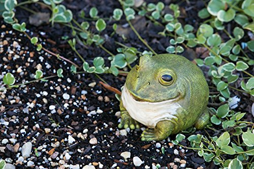 """Evergreen Garden Medium Portly Frog Painted Polystone Outdoor Statue and Key Holder - 6""""W x 5""""D x 6""""H by Evergreen Garden (Image #4)"""