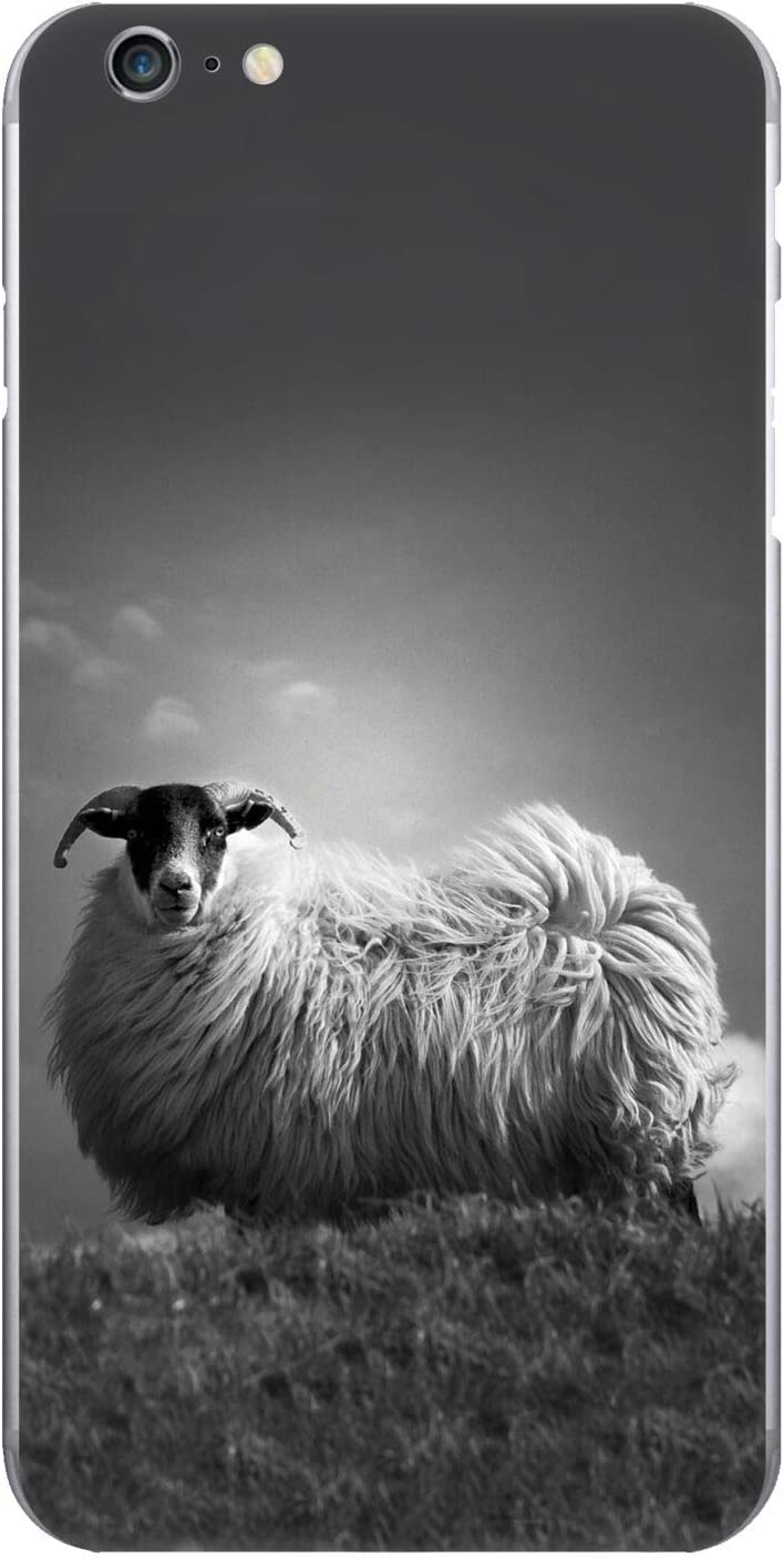Head Case Designs Official Dorit Fuhg Portrait of a Highland Cow Travel Stories Glossy Vinyl Sticker Skin Decal Cover Compatible for Apple iPhone 11 Pro