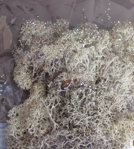 Super Moss Holiday Moss Pack of Real Glittered Reindeer Moss